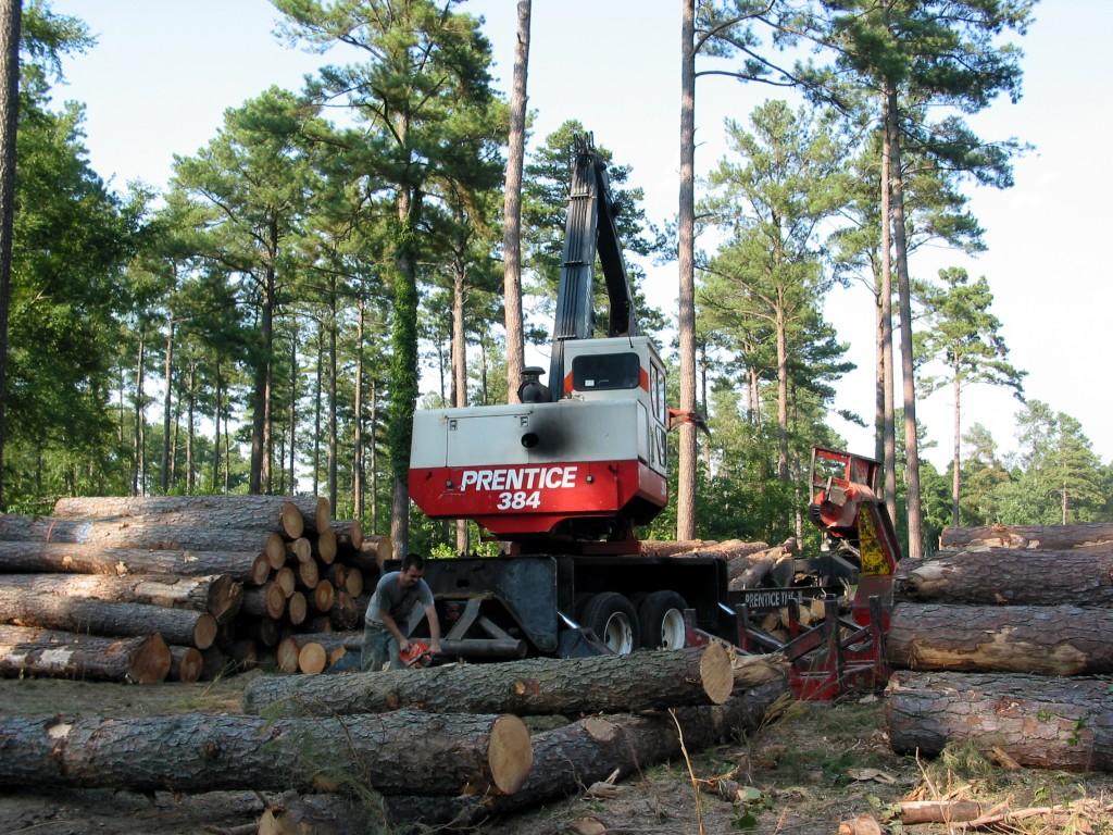 MN_timberharvest_19Feb15