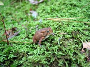 EN_amphibians_19Feb15