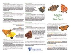 Butterfly brochure