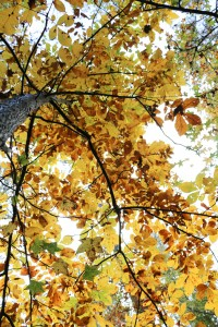 Shaver_Amanda_2_ThroughtheTrees