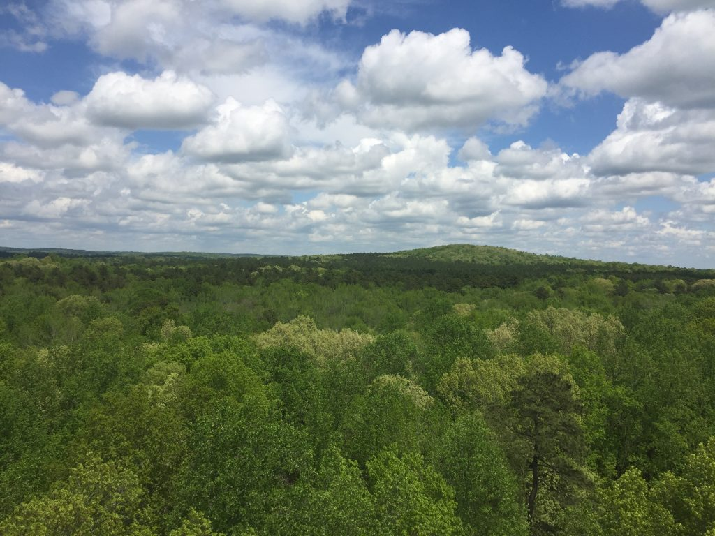 view of forested landscape from a tower