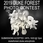 photo contest flyer, picture of flower with contest info text overtop