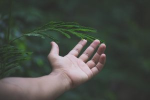 Image of hand touching evergreen tree with deep feeling