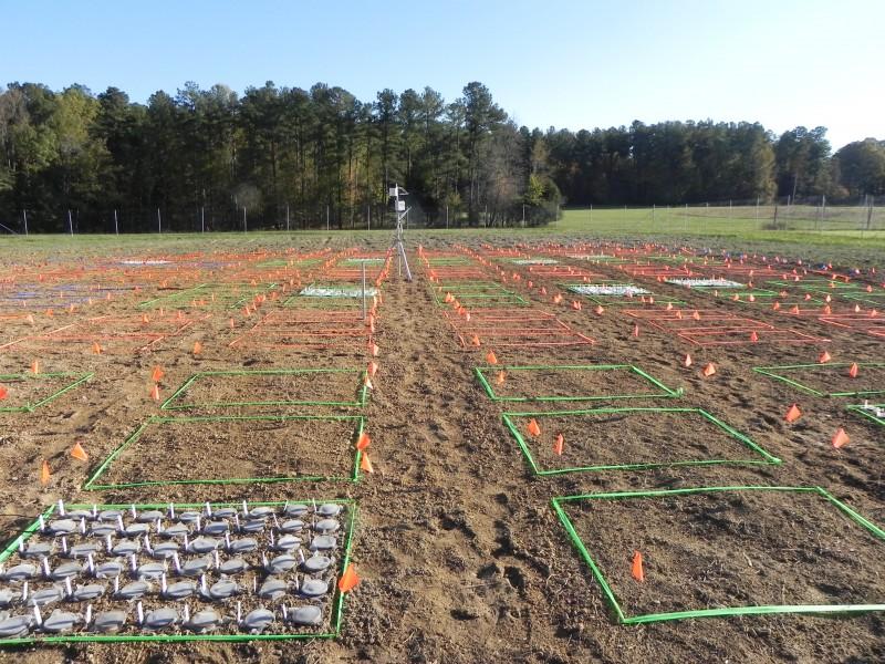 2011 field 002